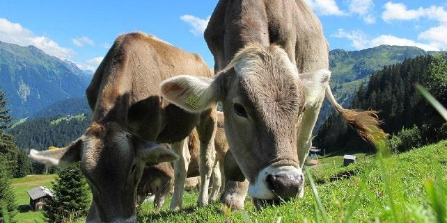 Nachhaltigkeitssiegel auf tierische Produkte