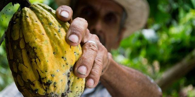 Nachhaltigkeitssiegel für Kakao