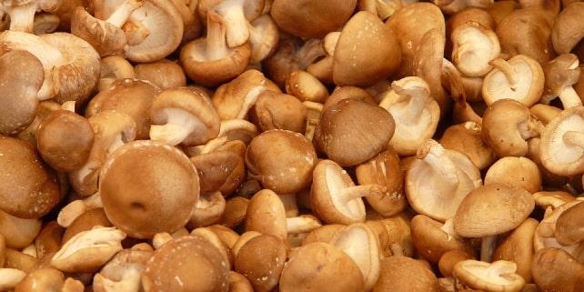 Ein perfekter Fleischersatz ist der Shiitake-Pilz